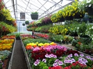 Image 2 | Mary's Greenhouse