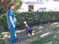 Image 8 | VCA Ben White Animal Hospital