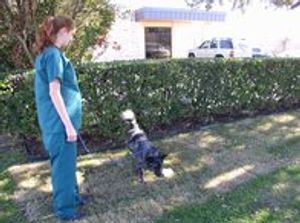 Image 8 | VCA Ben White Animal Hospital