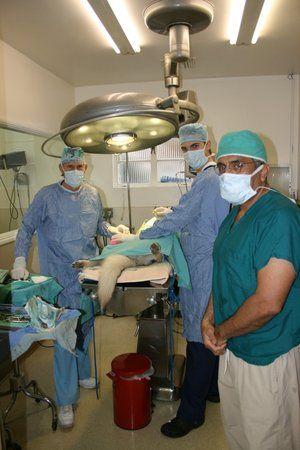Image 4 | VCA Brentwood Animal Hospital