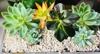 We also have succulents!