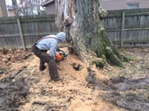 Image 8 | Chipps Tree Service