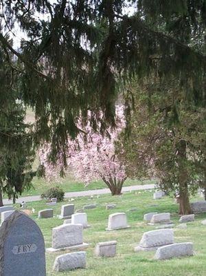 Our Magnolia Tree on Sunnyside Lawn