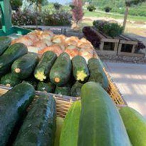 Image 10 | Gregory Creek Garden Center