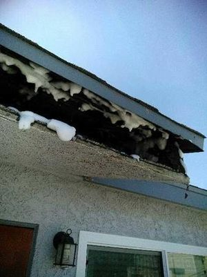 Commercial Termite Control