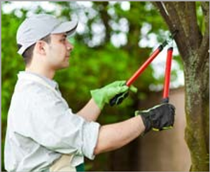 Image 2 | Walsh Tree Service