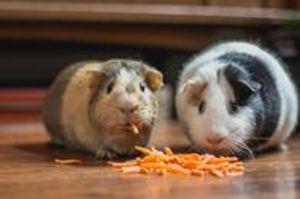 Image 3 | Pet's Choice Animal Hospital