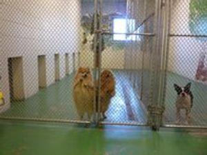 Image 3 | VCA Bering Sea Animal Hospital