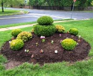 Image 2   Modern Lawn Service LLC