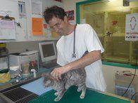 Image 3 | VCA Metro Cat Hospital