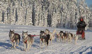 Image 2 | Braeburn Siberians