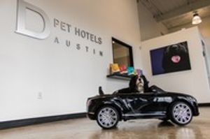 Image 10 | D Pet Hotels Austin