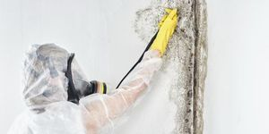 Why You Need Professional Mold Remediation Services