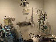 Image 7 | VCA Metro Cat Hospital