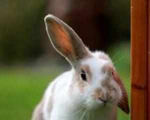 Image 6 | Pet's Choice Animal Hospital
