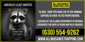 Image 4   All Nuisance Trapping