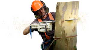 Image 5 | Walsh Tree Service