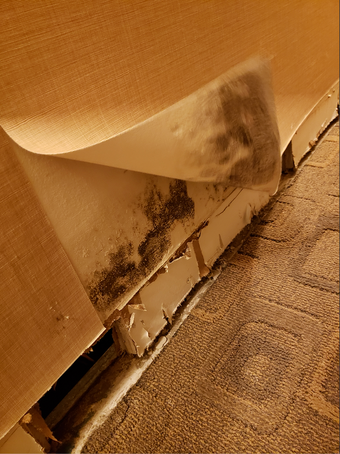 Mold damage can be found during water mitigation. SERVPRO of Brickell can remediate any mold discovered during mitigation.