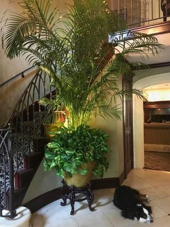 Check out our house plant store
