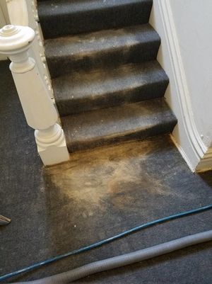 Before Carpet Cleaning Picture