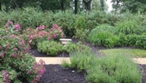 Our Perennial Gardens in Serenity.