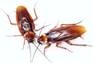 Image 6 | Pest-Tec