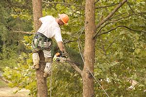 Image 3 | Tree King of Long Island