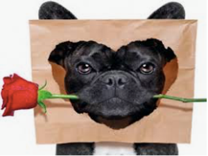 Need Raw diet for your pets? Love's Pets in Agoura Hills, CA has the largest selection of raw diets with a strong emphasis on holistic on natural care. Homeopathic and herbal remedies.