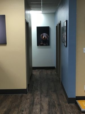 The Hallway at VCA West Bernardo Animal Hospital