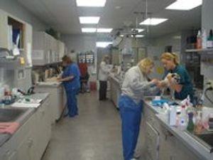 Image 4 | VCA Briarcliff Animal Hospital