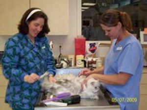 Image 5 | VCA Swengel Animal Hospital