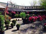 Tall Plants Plant Nursery