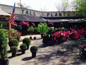 Tall Plants Plant Nursery