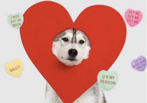 Image 7   Love's Pets
