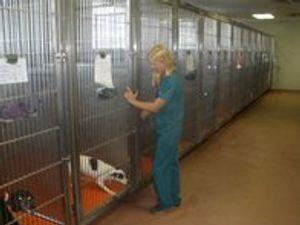 Image 3 | VCA Briarcliff Animal Hospital