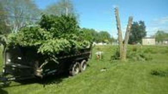 Image 7   Wild Land Tree Care