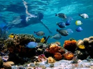 Snorkeling...where you're at one with the fish.