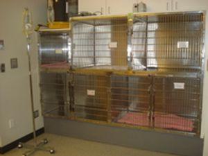Image 5   Broadway Veterinary Clinic