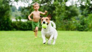 Image 3 | Riverflow Pet Clinic