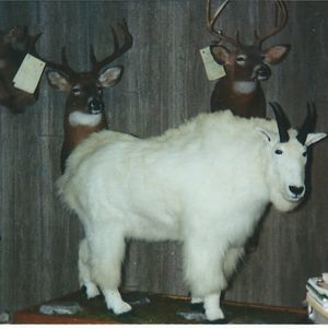 Image 2 | Ron's Taxidermy