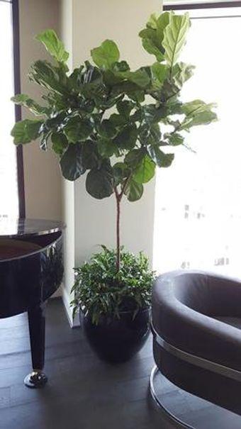 Ask about our plant maintenance service