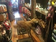 best pet boutique in the Highlands!