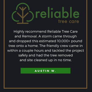 Image 9 | Reliable Tree Care and Removal