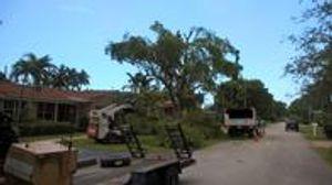 Tree trimming in Miami, FL.