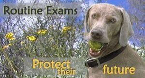 Image 3 | Little Neck Veterinary Clinic