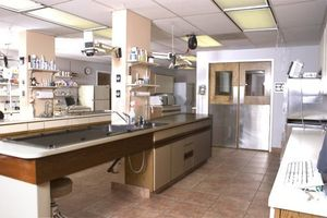 Image 5 | Apollo North Animal Hospital