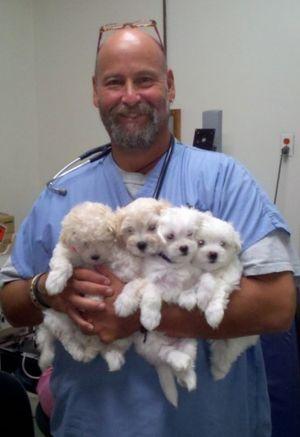 Image 8 | VCA Brookline Animal Hospital