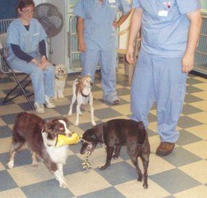 Image 3 | VCA Brookline Animal Hospital