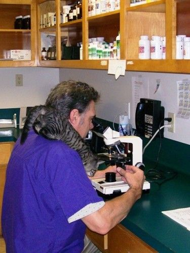 Image 6 | Crystal Mountain Animal Hospital