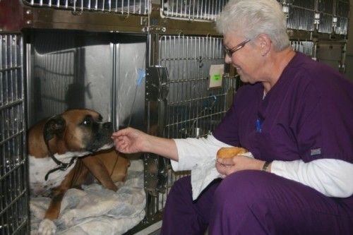 Image 4 | Animal Care Unlimited